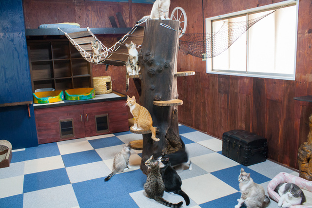 長野 市 猫 カフェ